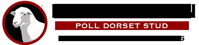 Rowallan Poll Dorsets